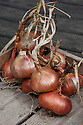 'Red Gourmet' shallots.