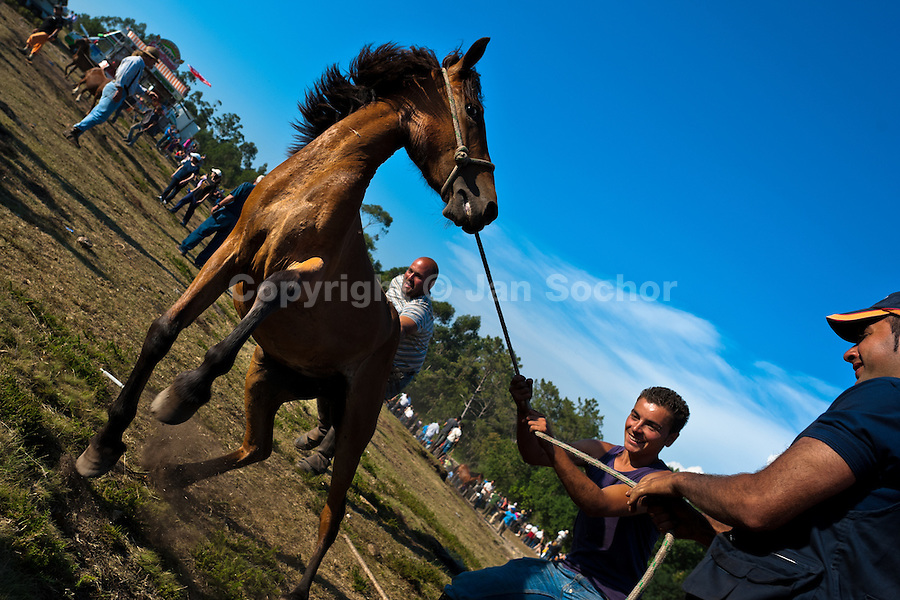 Villagers tame a wild horse during the Rapa das Bestas (Shearing of the Beasts) festival in Torroña, Spain, 5 June 2011. The herds of of wild horses roam freely the hills of Galicia in the north-western Spain. Each year, in the beginning of summer, villagers herd horses down from the higher ground, rounding them up in the curro, a centuries-old stone arena. Here, ranchers catch the animals one by one and shear their manes and tails. Some of the young men, showing up their strength and courage, fight the untamed horses just with their bare hands. At the end of Rapa das Bestas, a 400-year-old Spanish tradition, the newborn foals are branded and all horses are released back into the wilderness.