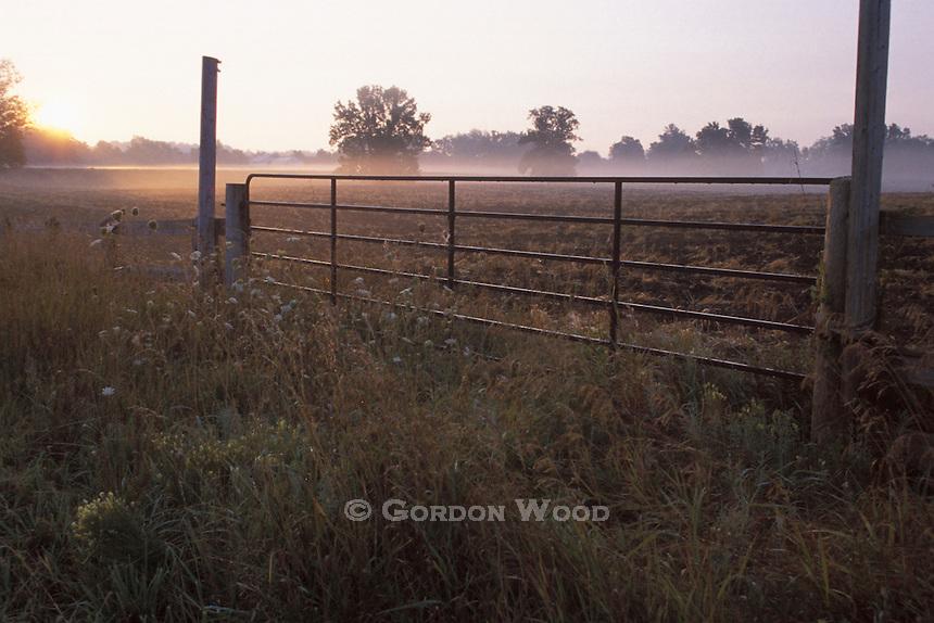 Farm Gate and Morning Fog in Farm Field