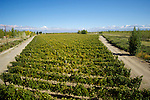 The Catena Zapata vineyard in Mendoza, Argentina.