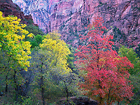 Fall color. Zion National Park, Utah.