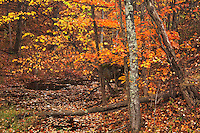 Autumn forest and wetland