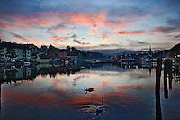 Pair of Mute Swans on Rhein River at sunset, Schaffhausen, Switzerland.Cygnus olor