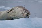 False Bay, Livingston Island, Antarctica