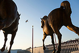ITALY, Venice. The Horses of St. Mark, horse sculptures on the facade of St. Mark's Basilica. These are replicas of the original which have been placed inside the Basilica for conservation purposes.