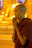 Myanmar, Burma.  Shwedagon Pagoda, Yangon, Rangoon.  Young Monk Praying at Buddhist Shrine.