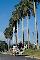 Horse pulling a taxi cart filled with people on a road outside Pinar del Rio, Cuba.