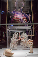 Siliconized parts of the respiratory system are seen on display on the Human Body exhibition in Budapest, Hungary on March 26, 2012. ATTILA VOLGYI