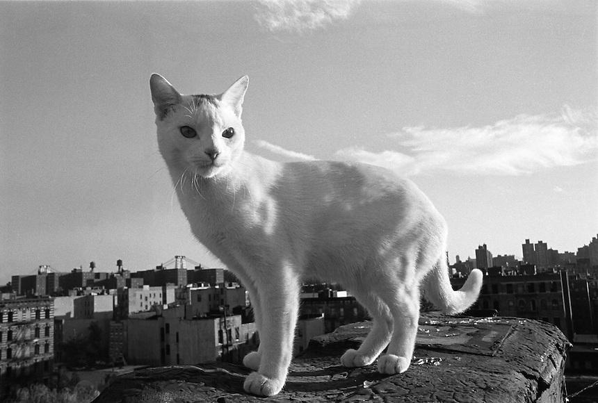 Cat on roof East 7th Street, Alphabet City, NY 1989