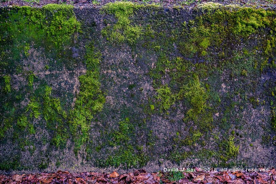 3.18.17 - Moss Art...