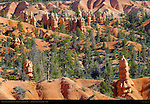 Fairyland Canyon Landscape, Hoodoos and Douglas Fir, Bryce Canyon National Park, Utah