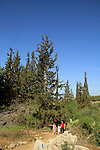 Israel, Shephelah, Israel Trail in Masua forest