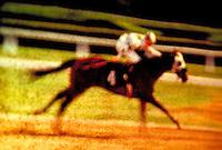 Horse racing, galloping, running. United States.