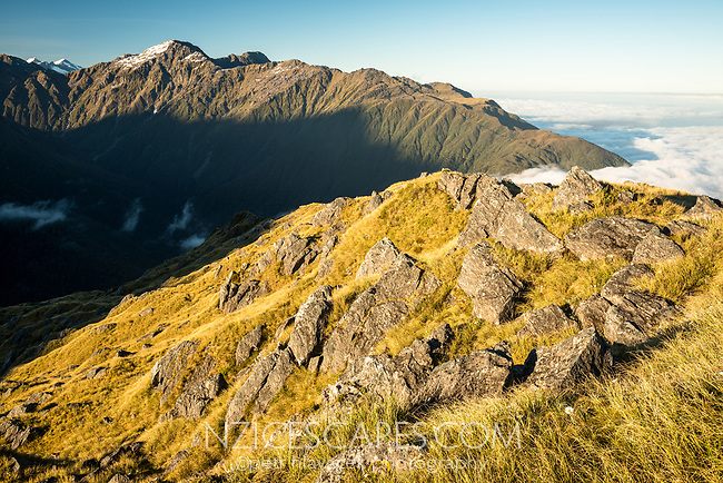 Alpine vistas from Mt. Fox in Southern Alps , Westland Tai Poutini National Park, West Coast, UNESCO World Heritage Area, New Zealand, NZ