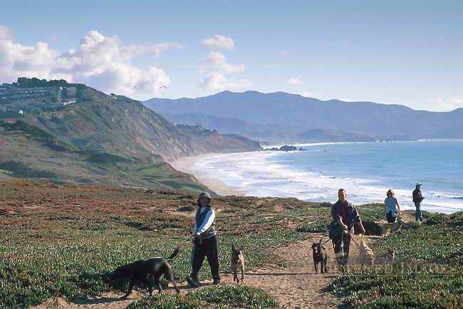 Walking dogs at Fort Funston, San Francisco, California