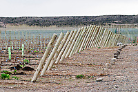 Graphic view of supporting posts and metal wiring in the vineyard. Bodega NQN Winery, Vinedos de la Patagonia, Neuquen, Patagonia, Argentina, South America