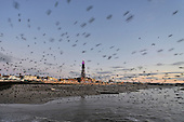 2011-11-22 Blackpool Sunset and Starlings heading to roost