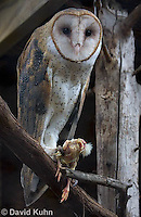 0507-0901  Barn Owl with Partially Consumed Bird Prey in Talons, Tyto alba  © David Kuhn/Dwight Kuhn Photography