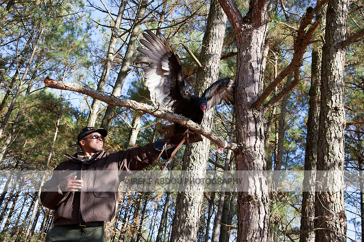This turkey vulture at the Pocomoke River State Park in Maryland is under the care of the National Park Service.