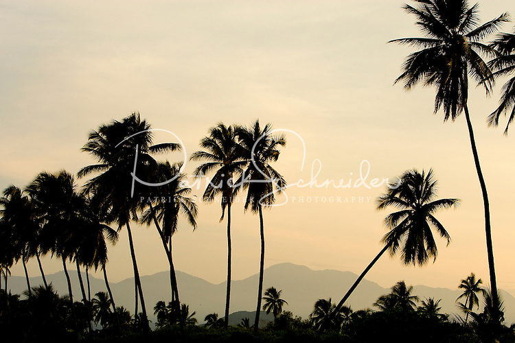 As the sun sets over the resort community of Ixtapa, Mexico, stately palm trees make a striking silhouette against grey/brown mountains in the distance. (taken August 2007). Photo by Patrick Schneider Photo.com