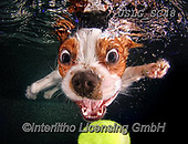REALISTIC ANIMALS, REALISTISCHE TIERE, ANIMALES REALISTICOS, dogs, paintings+++++SethC_Monty_IMG_5127rev5lflatpsd,USLGSC48,#A#, EVERYDAY ,underwater dogs,photos,fotos ,Seth