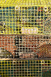 Colorful lobster traps.