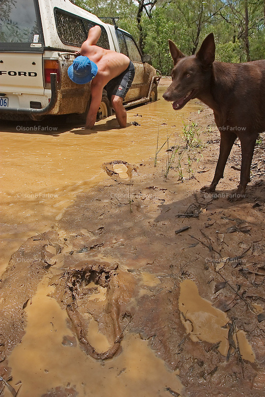Dog watches as friends leave mud prints while trying to get their Jeep out of the mud.