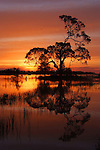 Sundown on Lake Colah Kapana newr Narrandera Nsw. This lake which has not seen water for apx 40years provided a great backdrop for my shoot.