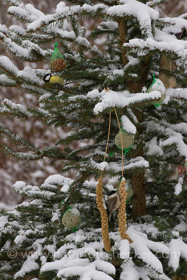 Vogelfutter, Vogel-Futter, Weihnachtsbaum wird für Vögel im winterlichen Garten geschmückt mit Meisenknödeln, Hirsestangen, Fettfutter in Ausstechformen und anderen Leckereien