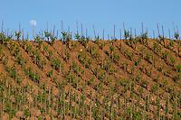syrah moon over the vineyard hermitage rhone france