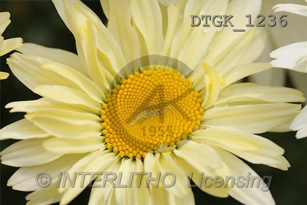 Gisela, FLOWERS, photos(DTGK1236,#F#) Blumen, flores, retrato