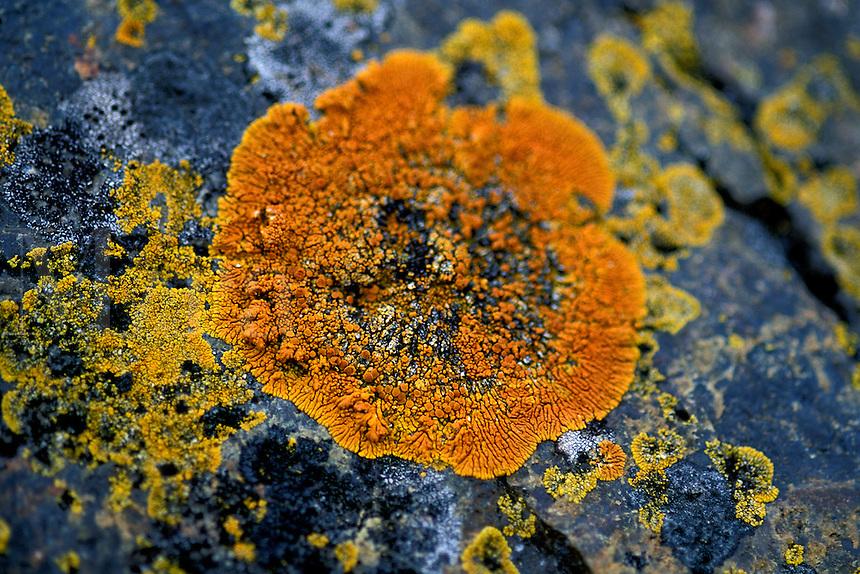 Lichen, Antarctica