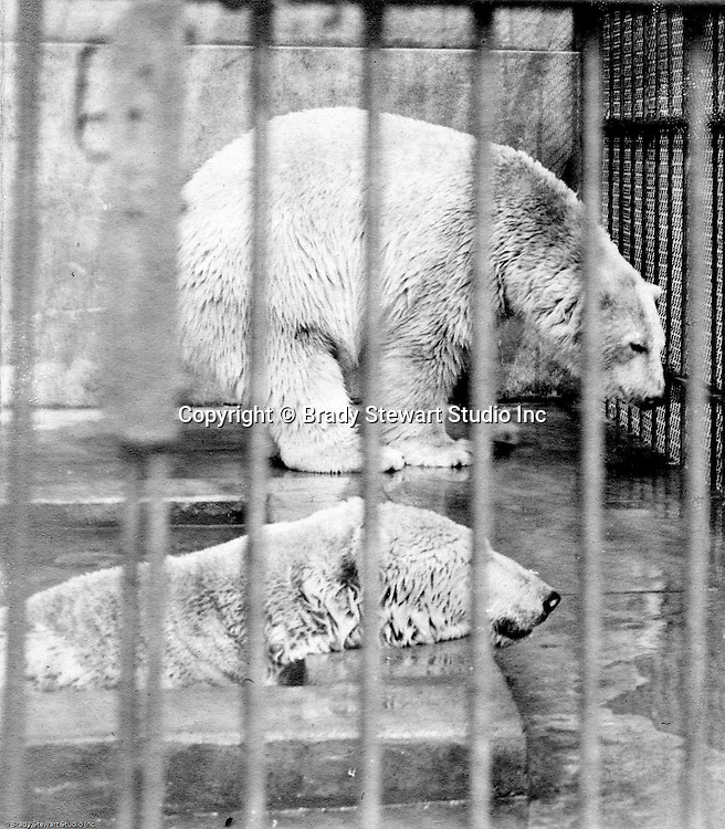 Highland Park:  Two polar bears taking a dip at the relatively new Pittsburgh Zoo - 1904.  The zoo opened in 1898 with money donated by Christopher Magee, has evolved into one of the best Zoos for animals - no more cages with concrete floors. The Stewart family visited the park and zoo often since they lived nearby on Wellesley Avenue in Highland Park.