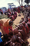 Maasai Moran have the fat from  a sacrificial cow daubed on them (as well as  taking a bite from it's flesh)   during  the ceremony that will bring them into manhood. Kajiado, Kenya.