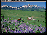 Wilson Peak (center) with Lupine flowers and old barn, Telluride, Colorado, USA.