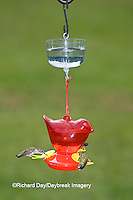 01162-12513 Ruby-throated Hummingbirds (Archilochus colubris) at feeder with ant guard,  Marion Co.  IL