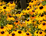 Butterflies and bees  explore the flowers in a garden at Jefferson Vineyards.