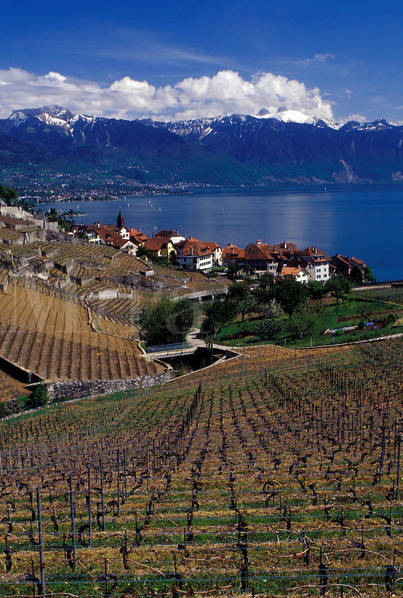 vineyard, Switzerland, Vaud, Lake Geneva, Vaud, Lavaux, Alps, Europe, Scenic view of the village of Rivaz surrounded by vineyards and the Alps along the lakeshore of Lac Leman in the spring in the Canton of Vaud.