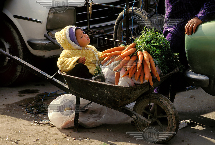 Child sitting in a wheelbarrow with a bunch of carrots at the market...