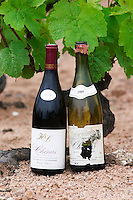 chans 1989 and 2006 domaine h lapierre beaujolais burgundy france