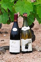 chans 1989 and 2006 domaine h lapierre beaujolais burgundy france