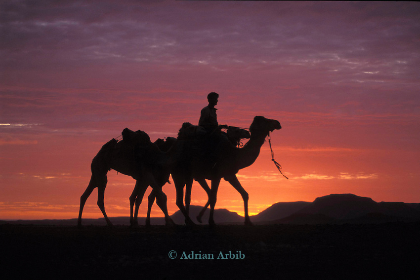 Explorer and writer Benedict Allen  in the rocky Damaraland desert during his journey by camels along the Skeleton Coast, Namibia.