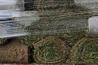 DEUTSCHLAND, Matthies Landwirtschaft in Wenzendorf, Anbau, Ernte und Verladung von Rollrasen fuer Gaerten, Stadien, Sportstaetten, Parks etc. / <br /> GERMANY cultivation of rolling lawn at Matthies Agriculture in Wenzendorf, lower saxonia