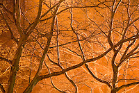 AVAILABLE FROM JEFF AS A FINE ART PRINT<br /> <br /> AVAILABLE FROM PLAINPICTURE FOR COMMERCIAL AND EDITORIAL LICENSING.  Please go to www.plainpicture.com and search for image # p5690049<br /> <br /> Bare Trees on East 4th Street in the East Village Illuminated at Night, New York City, New York State, USA