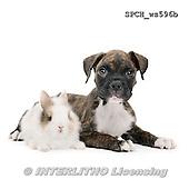 Xavier, ANIMALS, REALISTISCHE TIERE, ANIMALES REALISTICOS, FONDLESS, photos+++++,SPCHWS596B,#A#