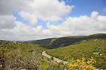 Israel, Upper Galilee, Road 864 from Rame' to Hosen