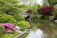 65021-03603 Bridge in Japanese Garden in spring, MO Botanical Gardens, St Louis, MO