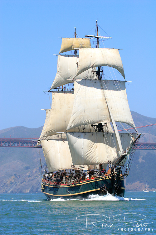 The tall ship Bounty sails into San Francisco Bay during the Parade of Ships as part of the 2008 San Francisco Festival of Sail. Built in 1960 for the MGM studios movie 'Mutiny on the Bounty' starring Marlon Brando the ship was constructed from the original ships drawings and built the same way as the original Bounty was 200 years earlier. Operated by the HMS Bounty Organization LLC the organization is dedicated to keeping the ship sailing and using her as a vehicle for teaching the nearly lost arts of square rigged sailing and seamanship. Photographed 07/08