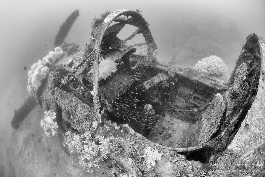 Munda, Western Province, Solomon Islands; a school of glassfish fill the cockpit of a Douglas A-24 Banshee Dive Bomber / Reconnaissance Aircraft, which crashed into the sea during WWII, resting upright on the sandy bottom, the wings have separated from the fuselage and are laying to its side but the propeller is still intact and bent back from impact with the water upon crashing