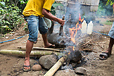 INDONESIA, Flores, Ngada District, a man lays a pig that has been sacrificed into the fire to burn off the fur